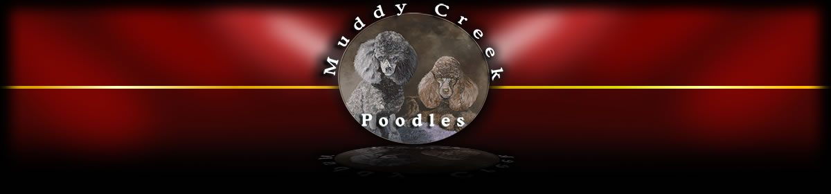 Muddy Creek Poodles
